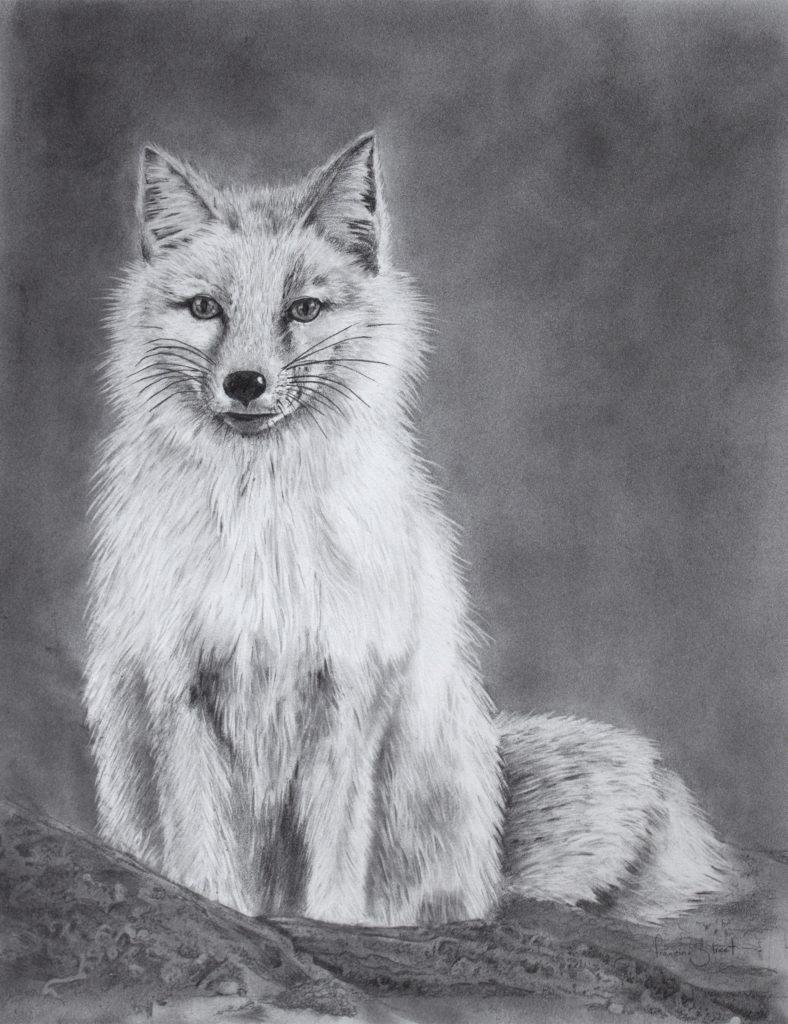 Clever Reynard - Fox Drawing